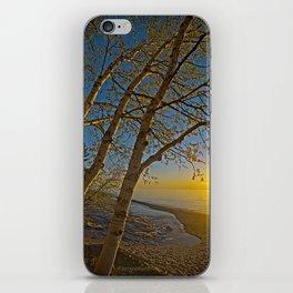 A Birch tree sunset iPhone Skin