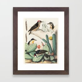 Woodpeckers And Cacti Framed Art Print
