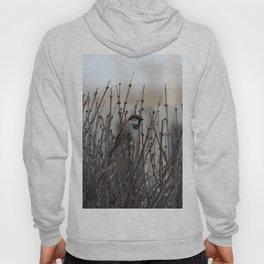 Chickadee in a Bush Hoody