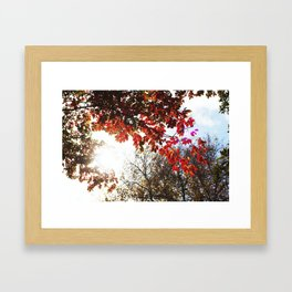 Autumn in the Air Framed Art Print