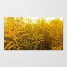 Gold Goldenrod Canvas Print