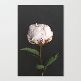 Peony - simply perfect Canvas Print