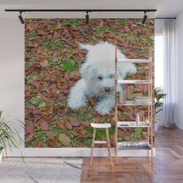 Teddy In Autumn Wall Mural