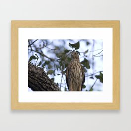 young coopers Framed Art Print