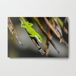 Green Carolina Anole Aloft Metal Print