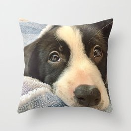 Sleepy Puppy Eyes Throw Pillow