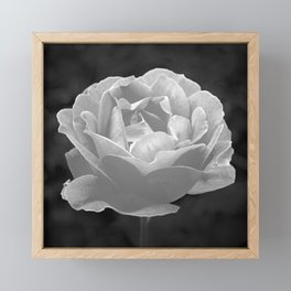 Silver Satin Rose - My Love For You Framed Mini Art Print