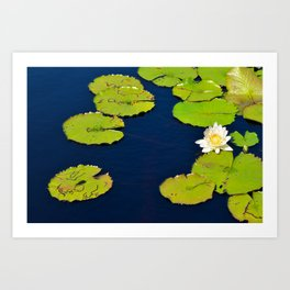 Dark Blue Pond by Teresa Thompson Art Print