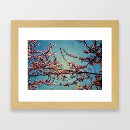Blossoms--Grunge  Framed Art Print