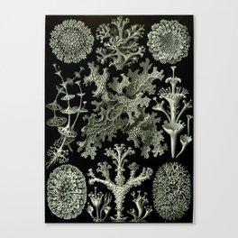 Naturalist Lichen Canvas Print