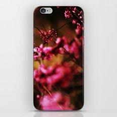 Last Spring iPhone & iPod Skin