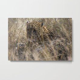 African Leopard Metal Print