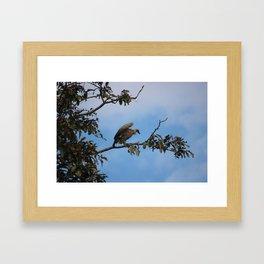 Vulture on start Framed Art Print