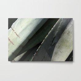 Agave Succulent Plant Close-up Metal Print