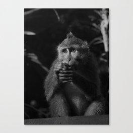 Monkey eyes Canvas Print