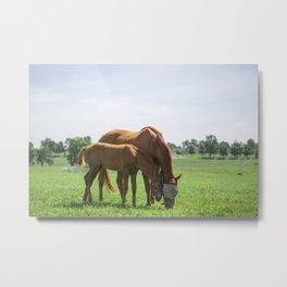 Mare & Foal Metal Print