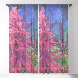 Hot Pink Kola Sheer Curtain