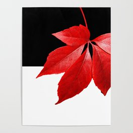 Red Leaf With Black & White Poster