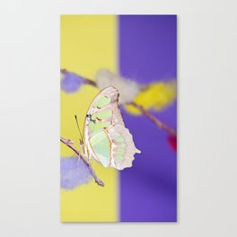 Tropical butterfly sitting on the colored bush over yellow and purple background Canvas Print