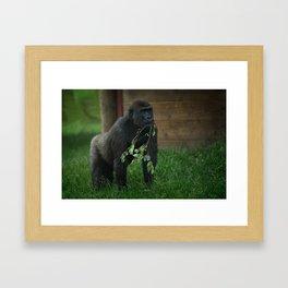 Lope The Gorilla Framed Art Print