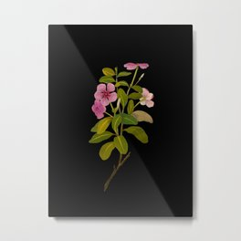 Vinca Rosea (Pentandria Monogynia) Mary Delany Vintage Realistic Botanical Flower Art Metal Print