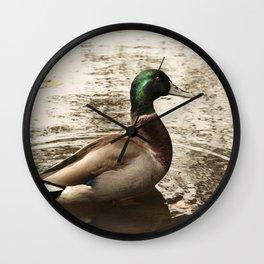 Sitting Duck waits Wall Clock