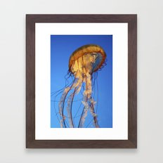 Jellyfish in Color Framed Art Print