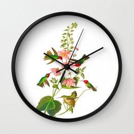 Columbian Hummingbird John James Audubon Vintage Scientific Bird Illustration Wall Clock