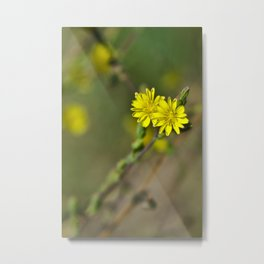 Golden flowers by the lake 3 Metal Print