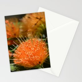 Flower Photography by Nádia A. Maia Stationery Cards