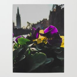 Bruges yellow and purple flowers Poster