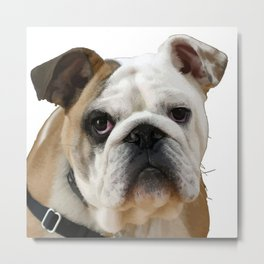 American Bulldog Background Removed Metal Print