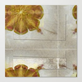 Unmuscular Configuration Flower  ID:16165-031505-06721 Canvas Print