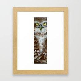 Brown Owl Framed Art Print