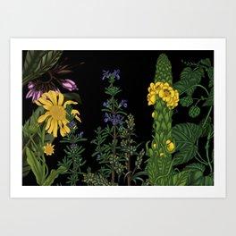 medicinal plants 2 Art Print