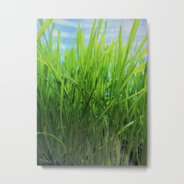 Wheat Grass in Motion Metal Print