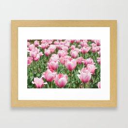 Arlington Tulips Framed Art Print
