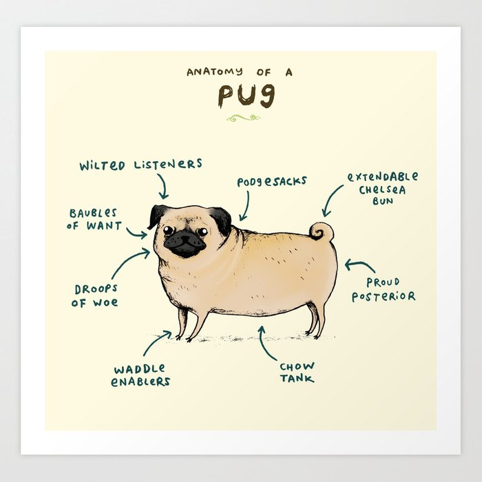 Anatomy Of A Pug Art Print By Sophiecorrigan Society6