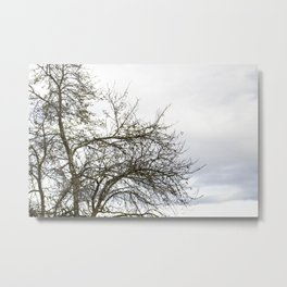 Through the branches 4 Metal Print