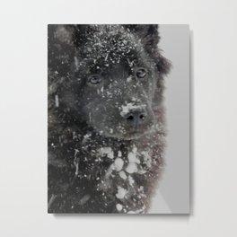 Snowy Koda Metal Print