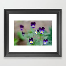 Violas Framed Art Print