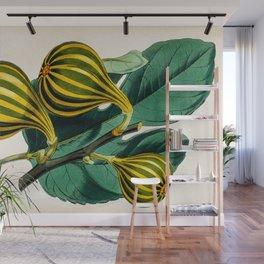 Fig plant, vintage illustration Wall Mural