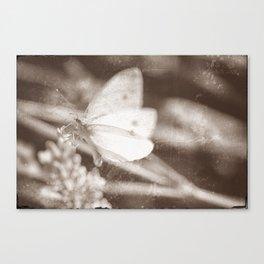 Butter Soft Canvas Print