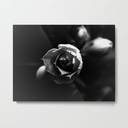 Black and White Kalanchoe Bud Metal Print