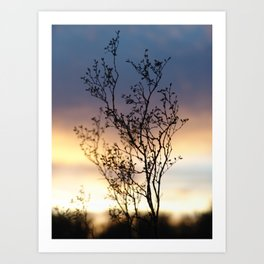 Creosote Bush at Sunset Art Print
