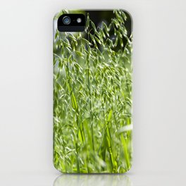 beautiful spikelets of oats iPhone Case