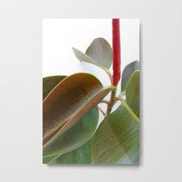 Green Plant Leaves 02 Metal Print