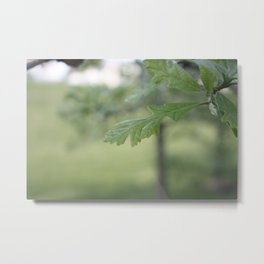 Oak Leaf Metal Print