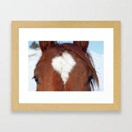 Gros Ventre Horse Framed Art Print