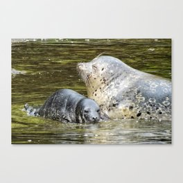 Harbor Seal Sweetness Canvas Print